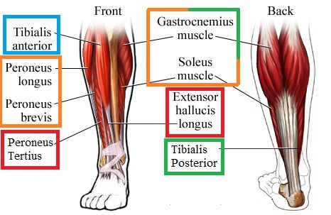 Fix those flabby feet exercises to help reduce pronation people ccuart Choice Image
