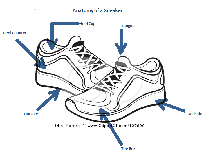 Parts Of A Basketball Shoes